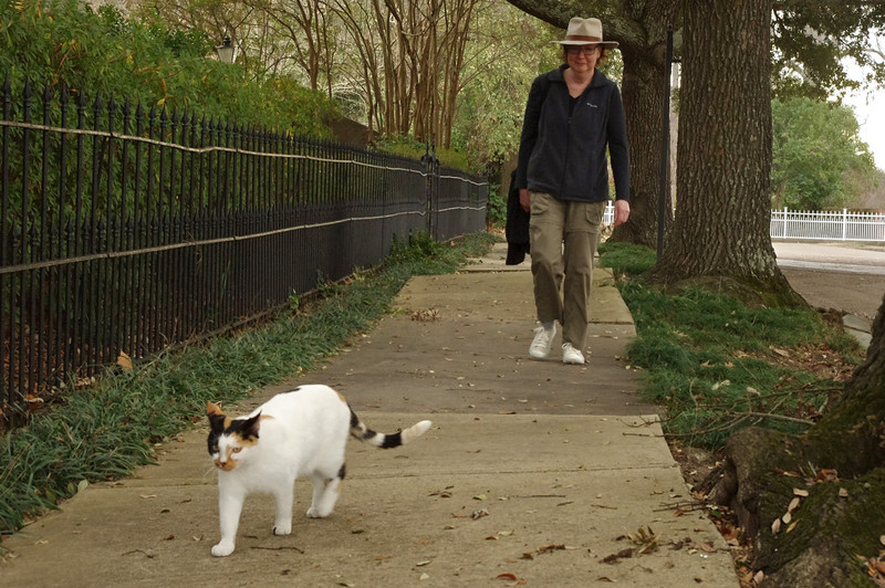 Rita following a calico cat on a sidewalk in Natchez, Mississippi.