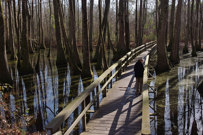 Rita on the boardwalk into the tupelo and cypress swamp. Natchez Trace Parkway, around mile post 122.