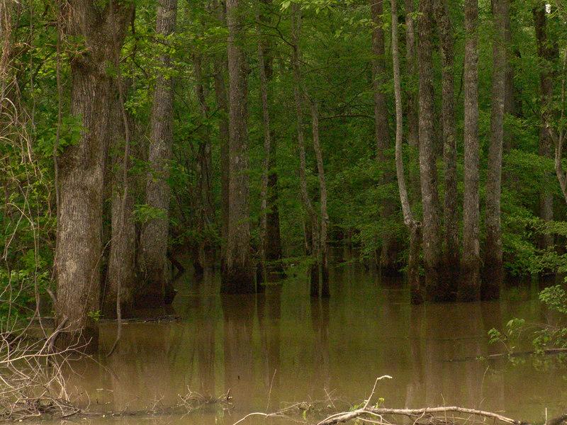 Hatchie River near Brownsville