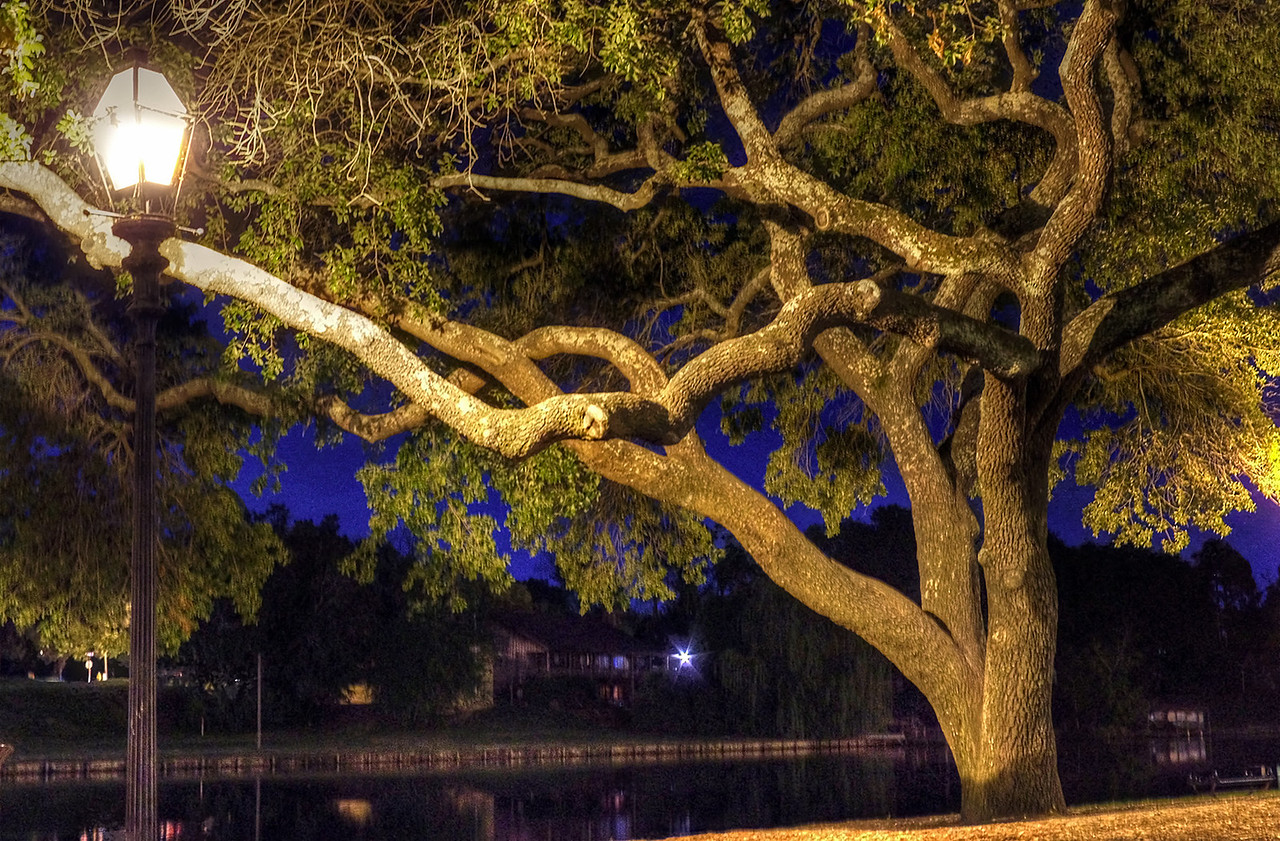 Live oak at night, Cano Lake, Natchitoches, Louisiana.