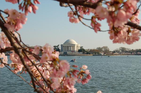 National Cherry Blossom Festival 2007