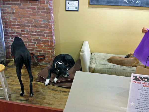 Three dogs at the Three Dog Bakery.