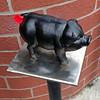 A pig in front of Schmidt's Sausage Haus.