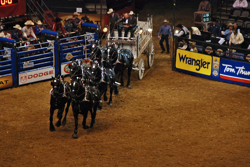 Demonstration of handling a large team of horses at the Texas Stampede Rodeo.