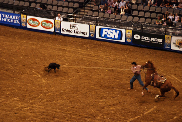 Tie down roping:  the horse pulls the lasso rope tight as the cowboy runs towards the calf.