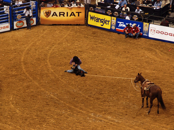 Tie down roping: the cowboy takes the calf down and ties it's legs together while the horse maintains control.