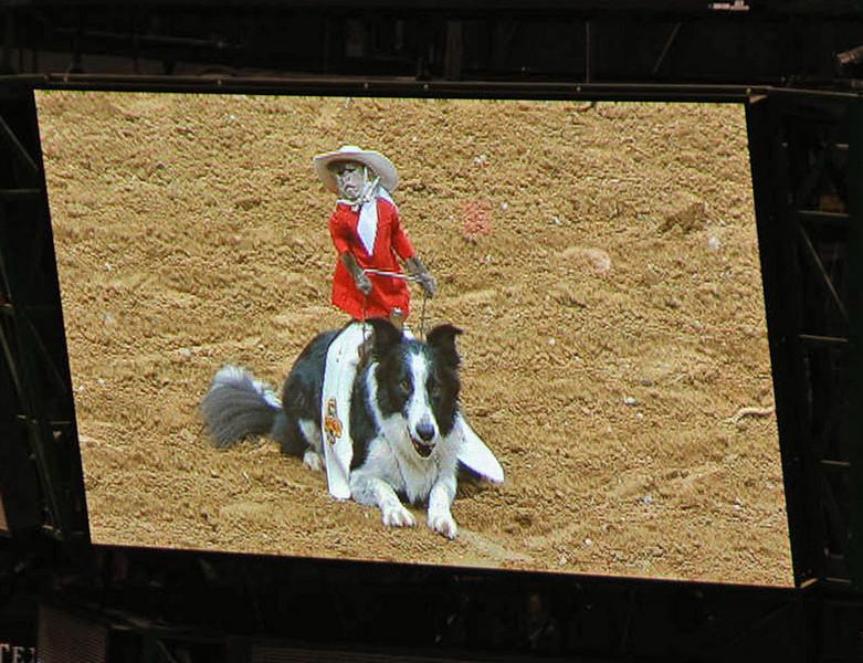 """Whiplash"", the cowboy monkey."