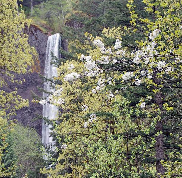 Latourell Falls.