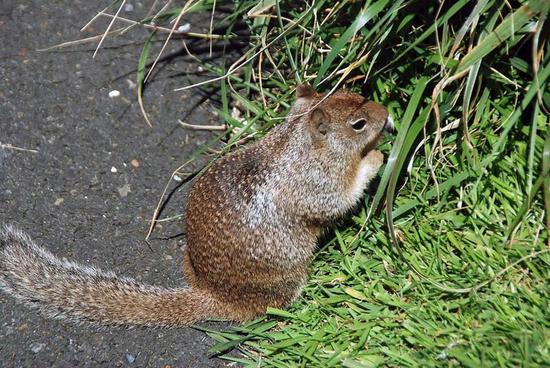 Wildlife at Depoe Bay, Oregon.