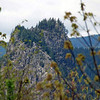 Beacon Rock seen from the Oregon side of the Columbia River.