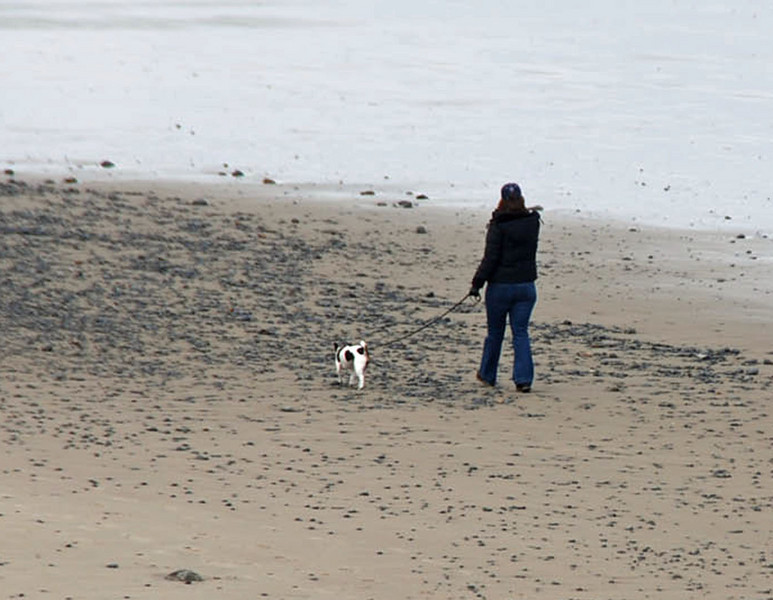 We spotted someone walking their Jack Russell Terrier on the beach.