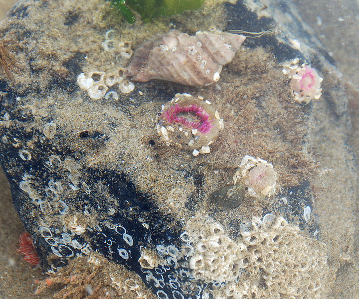 A closeup of the volunteer's display of several different kinds of tide pool animals.