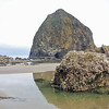 A small barnacle-covered rock, about 6 feet in diameter, is dwarfed by Haystack Rock in the distance.
