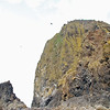 Haystack Rock is a protected bird sanctuary.  Many birds nest upon the sides of the 235 foot tall rock.