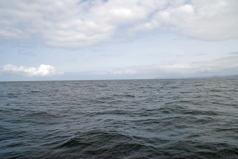 It's difficult to spot whale spouts in the rough seas.