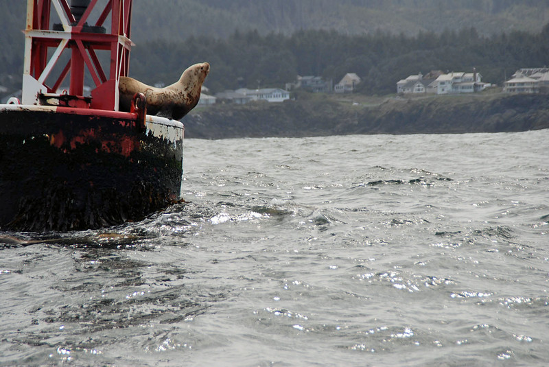 Seal preparing to jump off the buoy.