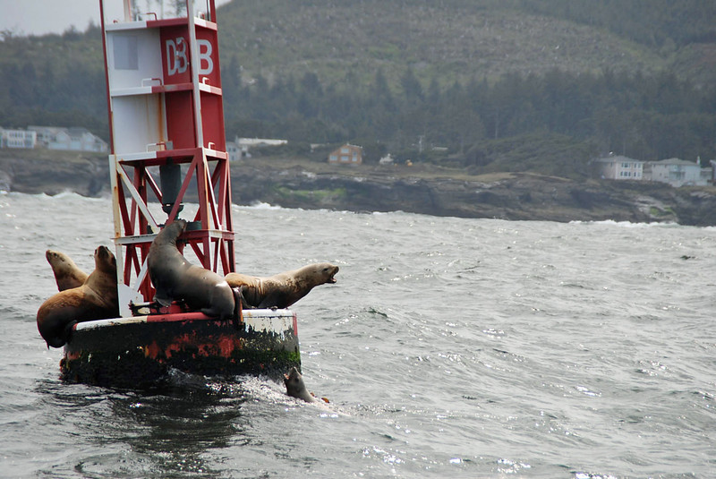 The only wildlife we spotted were these seals -- no whales were viewed.