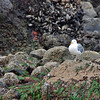 Birds are everywhere at Haystack Rock.