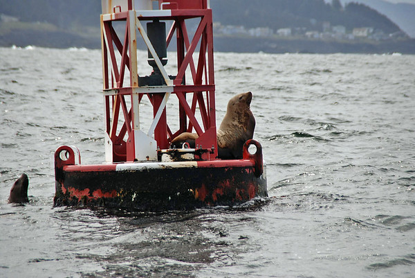Seals on the buoy.