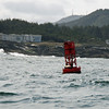 Harbor seal on the buoy.
