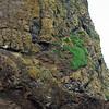 Birds roosting upon Haystack Rock.
