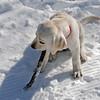 Crosby found a stick.