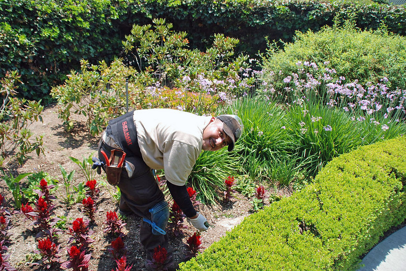 A gardener at Winchester House.