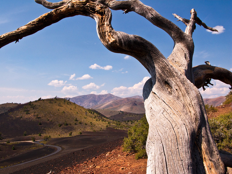 Dead Tree Frame, Craters of the Moon NM