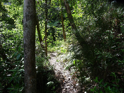 A narrow path winding through the forest.