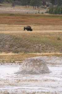 Dormant Geyser with Bison in the background, Yellowstone National Park.
