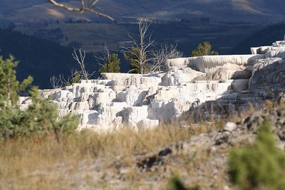 Minerva Terrace at Mammoth Hot Springs, Yellowstone National Park.
