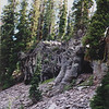 37 Lassen VNP - Lava Outcrop