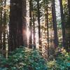 21 Redwood NP