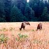 13 Redwood NP