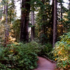 18 Redwood NP