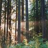 23 Redwood NP