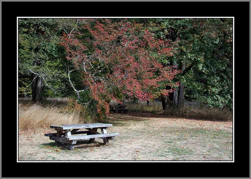 Picnic area at Madison Creek.