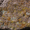 The Cliff Face Covered with Gorgeous Colored Lichen.
