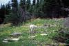Glacier National Park 2000-10