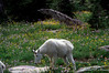 Glacier National Park 2000-14