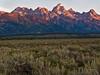 Teton Sage Sunrise Up Close