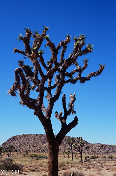 Joshua Tree National Park, Twentynine Palms, CA.