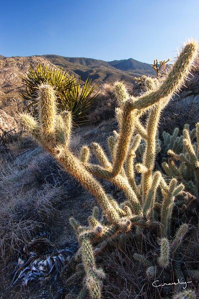 Cactus up close