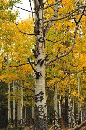 New Mexico - Bandeller National Park