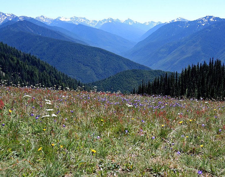 Overlooking snow capped peaks and glaciers in Olympic National Park,