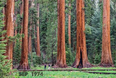 Sequoia 1974