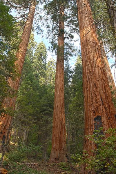 Redwood Creek, Kings Canyon
