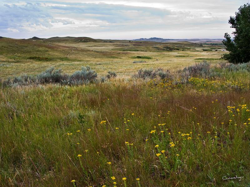 N Dakota Grasslands, Teddy Roosevelt NP