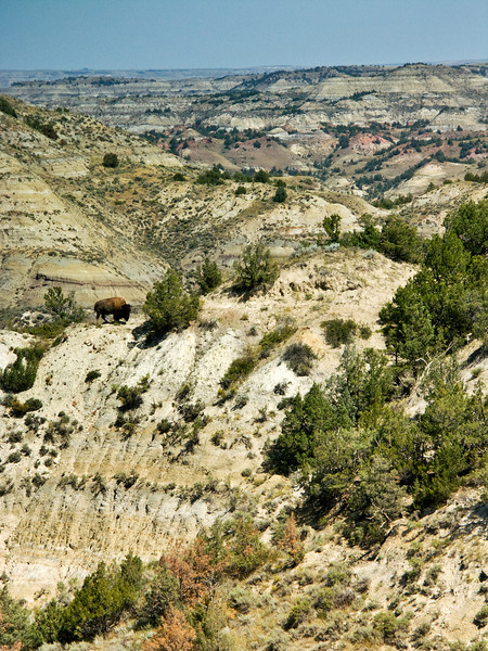 Bison on Hill, Overview