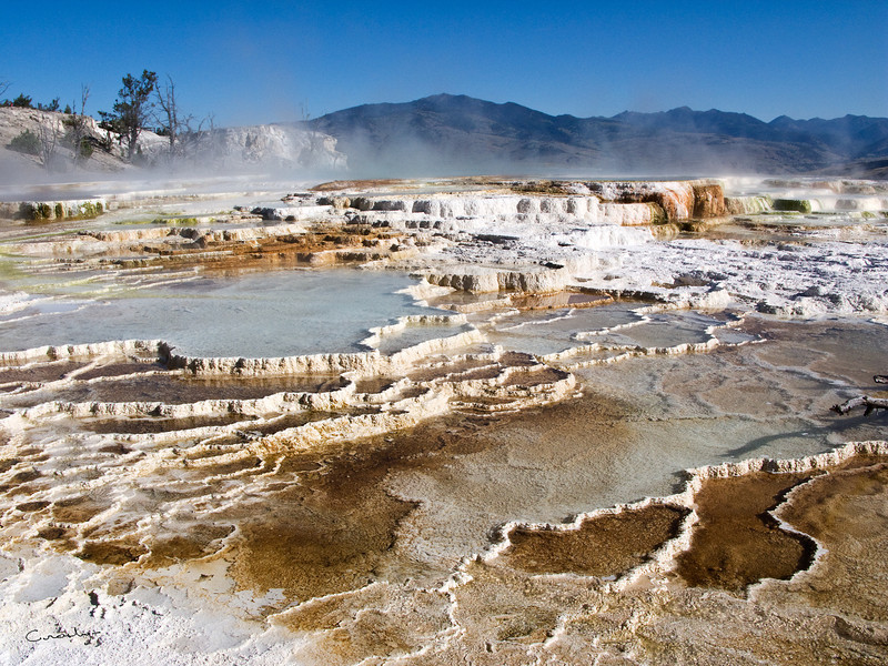 Mammoth Hot Springs Terraces 1, Yellowstone NP